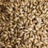 Malta de Avena (oat malt)